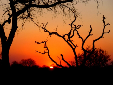 Sunset Game Drive