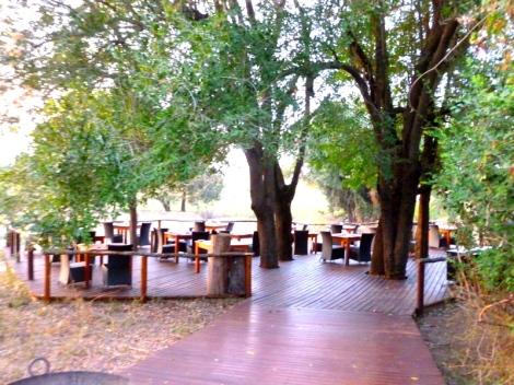 Breakfast in the trees
